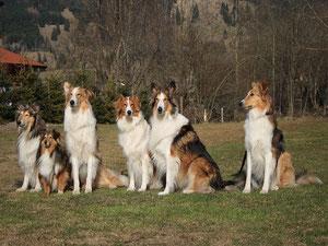 Hässliche, dumme, fette kastrierte Hunde