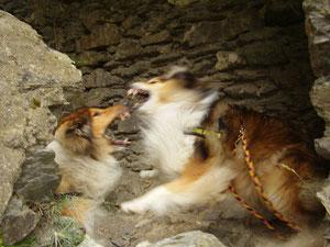 Zwei Hunde am gleichen Leckerchen - es wird NICHT beschwichtigt