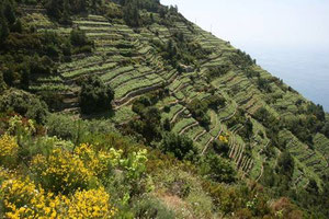 Sentiero dei Santuari nei vigneti Cinque Terre