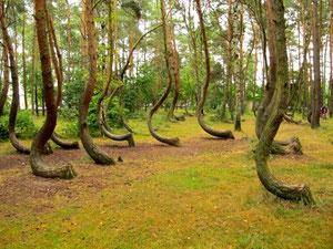 les arbres qui marchent...