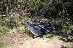 防風目的で設置されたネットと共にアカキナノキが倒木した