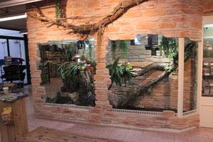 """Das große Terrarium reicht auch für ausgewachsene """"Grüne"""" aus."""
