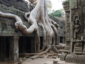 Ta Prohm Temple (Angkor)