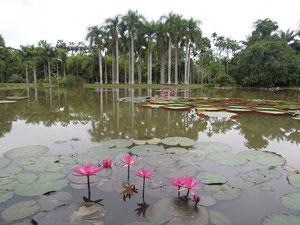 Der botanische Garten in Menglun