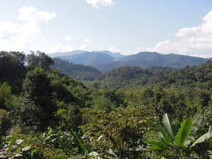 Jungle in northern Laos
