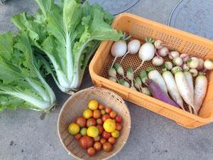 健康野菜の販売