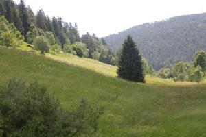 Im Hirschbachtal