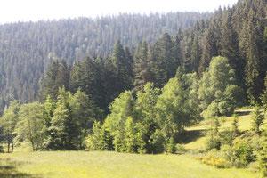bergauf entlang des Rohnbaches