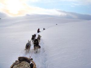 Hundeschlittentour  im Gebirge