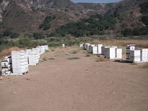 The apiary in the mountains (bees making blacksage)