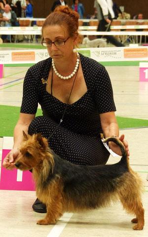 Klubsiegerin 2014 Haleth von den Grauen Anfurten