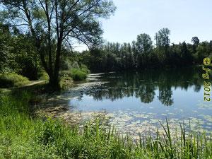 Waldsee bei Viernheim