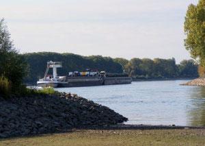 Rhein bei Lampertheim - Zusammenfluss mit Altrheinarm