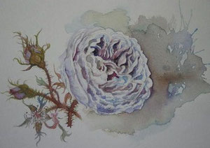 薔薇4 Roses(watercolor painting)