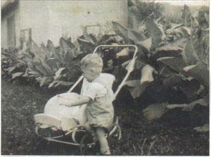 Tabakanbau in alten Zeiten