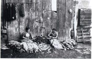 Maria und Hedwig Weber beim Tabakeinfädeln in der Gochsheimerstrasse