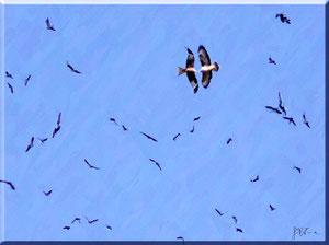 Cilento - Stormo di uccelli