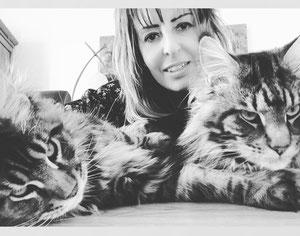Bouledogue et chats Maine coons socialisés avec nos chiens