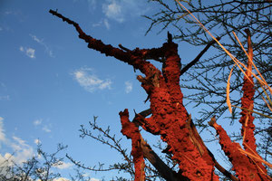 Namibia - Holzrecycling durch Termiten