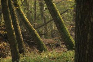 Wienerwald Wildnis I - Was ist los am Tag?