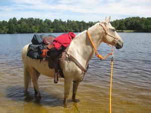 Edel'paradise, élevage de chevaux de couleur