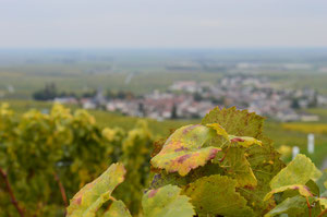 Grand Cru village of Bouzy after the harvest