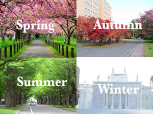 Four seasons on Japan- Spring, autumn, winter and Summer. Amazing Japan!