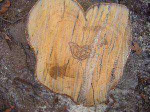 「ソヨゴ」切り株の跡の「蝶」の模様