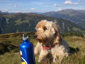 """Unser Bergsteigerhund """"NEPAL"""""""