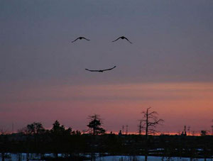 .... Merci ! ... Et le ciel vous sourit...