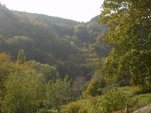 Les jardins en terrasses et les forêts de Châtaigniers