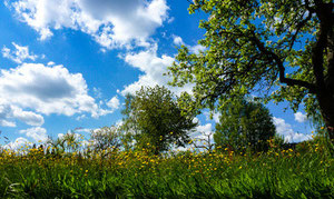 Landwirtschaft und Klimaschutz