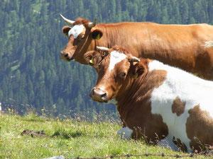Demeter Kühe