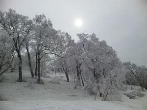 4月の樹氷