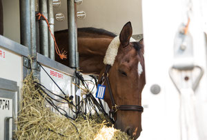 Horses were flown 'first class' says QR Cargo  -  company courtesy