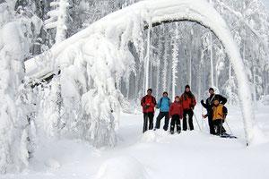 Wanderung duch den Winterwald