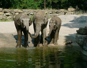 Foto: Zoo Heidelberg