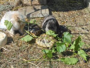 Klara und Yeti