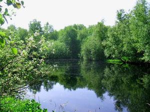 ...Moorsee in der Torfmöörte, Fotos: H. Lobensteiner