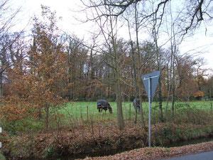 Wiese in Loy, Hankhauser Weg/Ecke Dorfstraße: hier sollen 1-2 Wohnhäuser entstehen... Fotos: H. Lobensteiner
