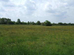 Moorlandschaft am Eggerkingsweg ...