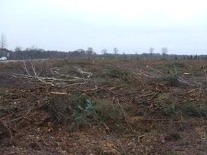 Behördlich sanktionierte Waldvernichtung: als hätte ein Tornado gewütet...