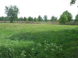 Hankhauser Moor