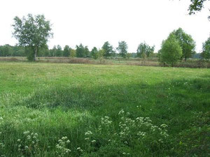Hankhauser Moor, Foto: H. Lobensteiner
