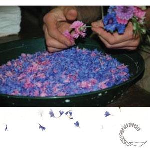 Préparation des fleurs. Moulin de Vallis Clausa