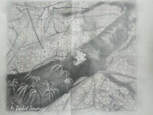 Cerezo de Okazaki (dibujo preparatorio)