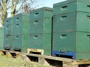 Der Bienenstand in der Bio-Imkerei Ökohof Fläming  besteht aus Holzbeuten, welche mit einem bienenfreundlichen Anstrich versehen sind.