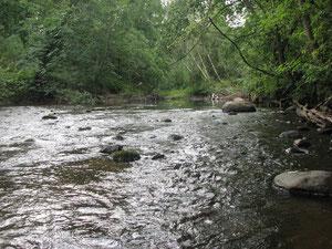 Река Щебереха. Фото Н. Борода