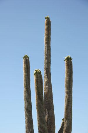 Foto. Saguaro National Park