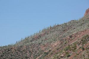 Foto Berghang mit Saguaro